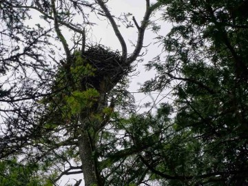 June 2019 Osprey Nest