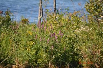 2016 GLRI Grant - Aquatic Vegetation Survey_19